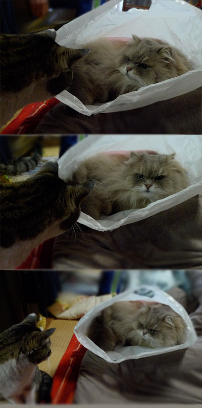 犬は喜び庭駆け回り、猫はこたつの横でビニール袋に入りたがる